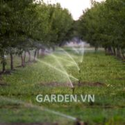 Thiet-bi-tuoi-nong-nghiep-Nelson-R10_in_almond_orchard